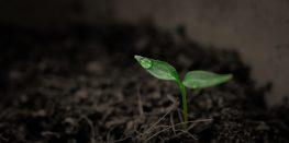 Peregrinar y crecer por dentro